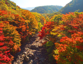 Mt Seoraksan Autumn Leaves Tour