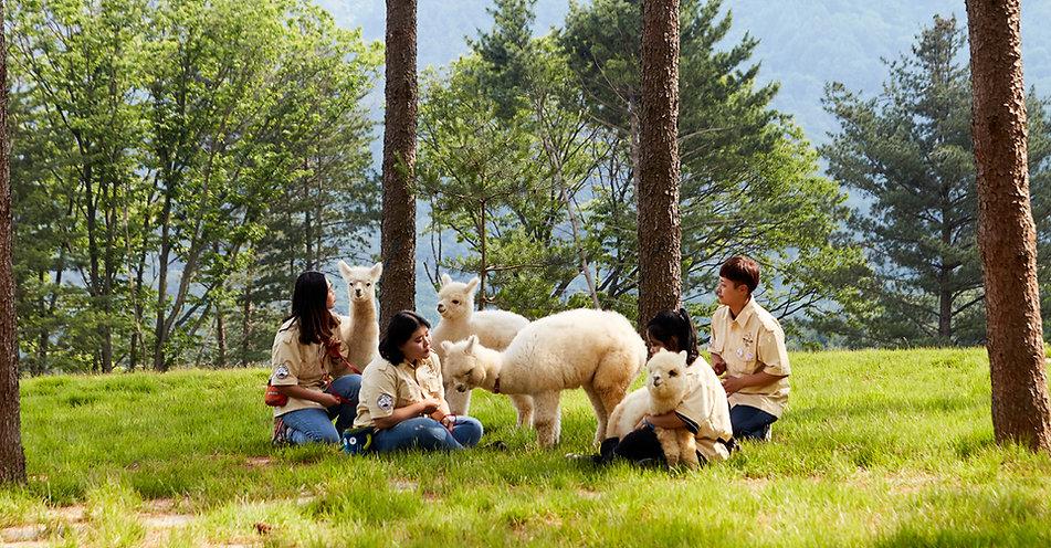 Farm Animals - Alpaca World Tour