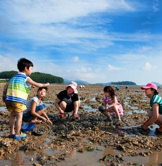 South Korea Culture Tour-Salt Farm & Shell Gathering