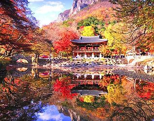 Mt Naejang Autumn Leaves Tour