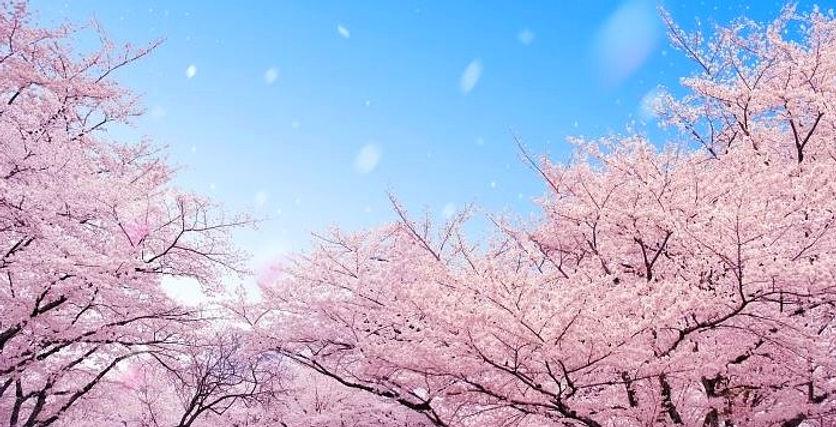 Korea private tour-Tagytravelkorea, Cherry blossom Tour