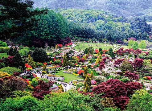 Morning calm Garden