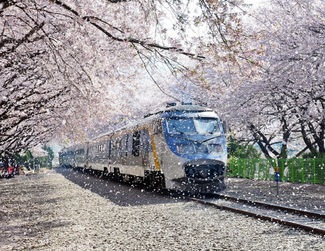 Jinhae Cherry Blossom Tour- Seoul City Tour