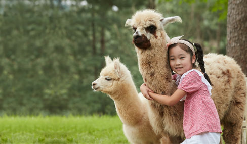 Alpaca World Kids Tour