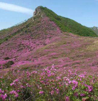 1N2D Camping at Mt Hwangmae