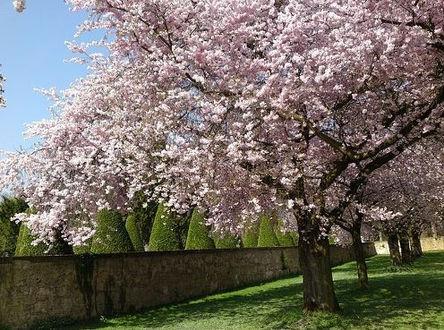 Korea private tour-Tagytravelkorea, Cherry blossom Tour, Seoul Grand Park(Seoul Land)
