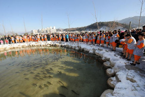 Pyeongchang Trout Festival-by bare hands,tagytravelkorea