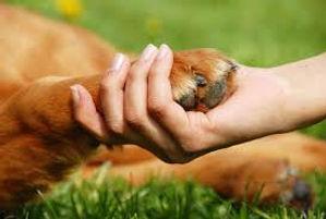 Une femme tient dans sa main une patte de chien