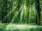 Rayon de soleil tranversant les arbres de la forêt
