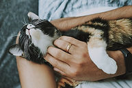 pet-care-4778387_1920.jpg