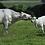 Thumbnail: Antrobus Farms