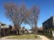 melbourne-caulfield-homes-park.jpg