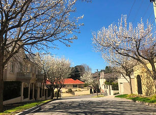 melbourne-toorak-houses-trees.jpg