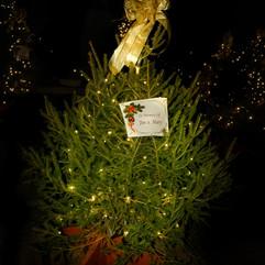 Tree of Hope (41).jpg