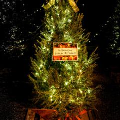 Tree of Hope (17).jpg