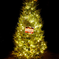 Tree of Hope (18).jpg