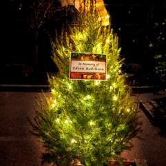 Tree of Hope (19).jpg