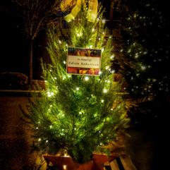 Tree of Hope (21).jpg
