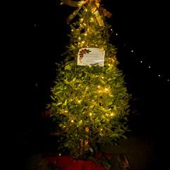 Tree of Hope (48).jpg