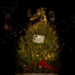 Tree of Hope (42).jpg