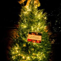 Tree of Hope (15).jpg