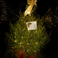 Tree of Hope (40).jpg