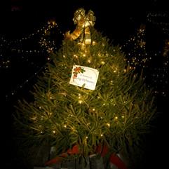 Tree of Hope (43).jpg