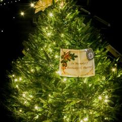 Tree of Hope (34).jpg