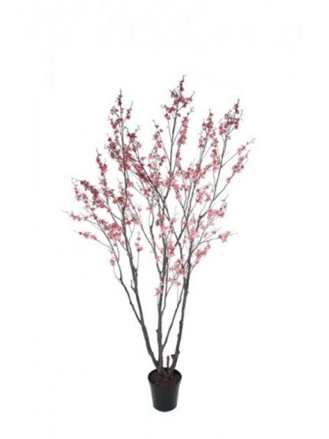 Kirsebærtræ, 240 cm / Cherry tree, 240 cm