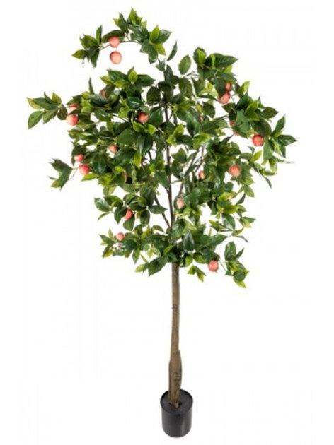 Æbletræ, 200 cm / Apple tree, 200 cm