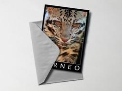 Notecard: Bornean Clouded Leopard