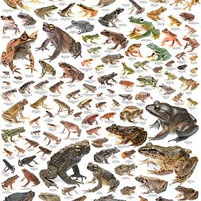 frog%20poster%20final_edited.jpg
