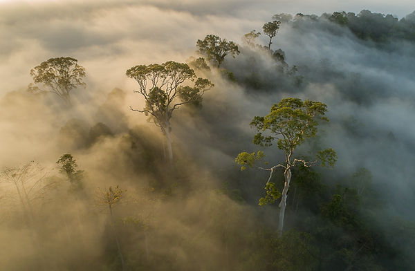 Rainforest at sunrise_2