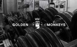 GOLDEN MONKEYS - Web