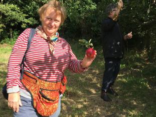 forager best wild apples ever.jpg