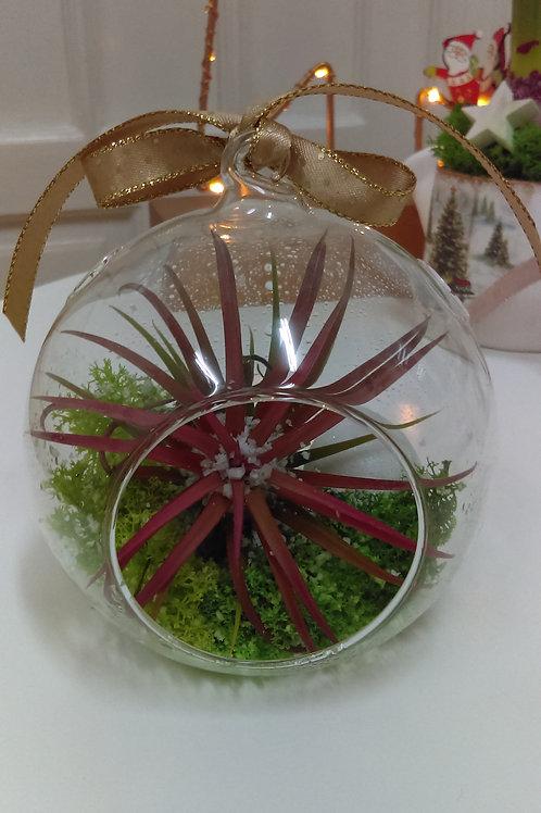 Tillandsia - planta aeriana in glob
