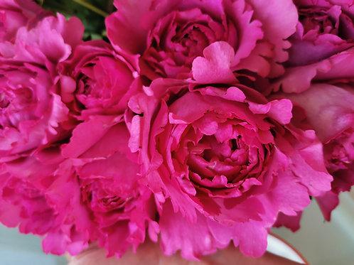 Trandafiri parfumati Yves Piaget