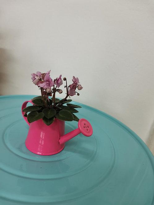 Plante cu flori cadou 2