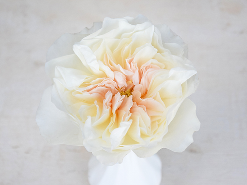 Buchet cu trandafiri David Austin Eugenie