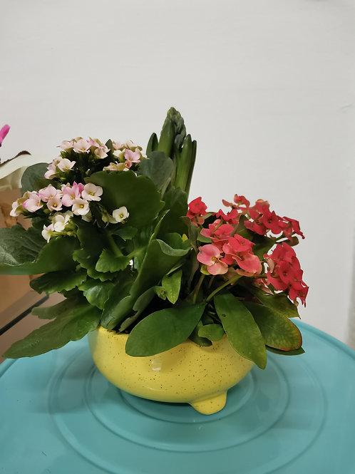 Plante cu flori cadou 3