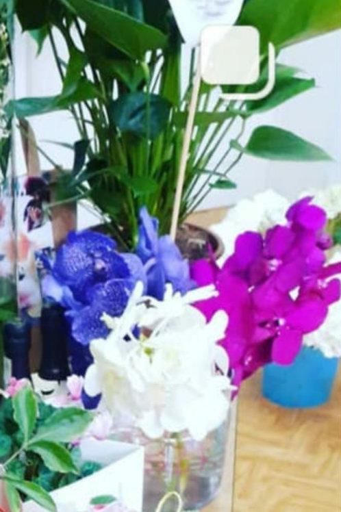 Orhidee Vanda