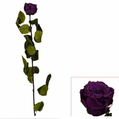 Trandafir criogenat 55cm