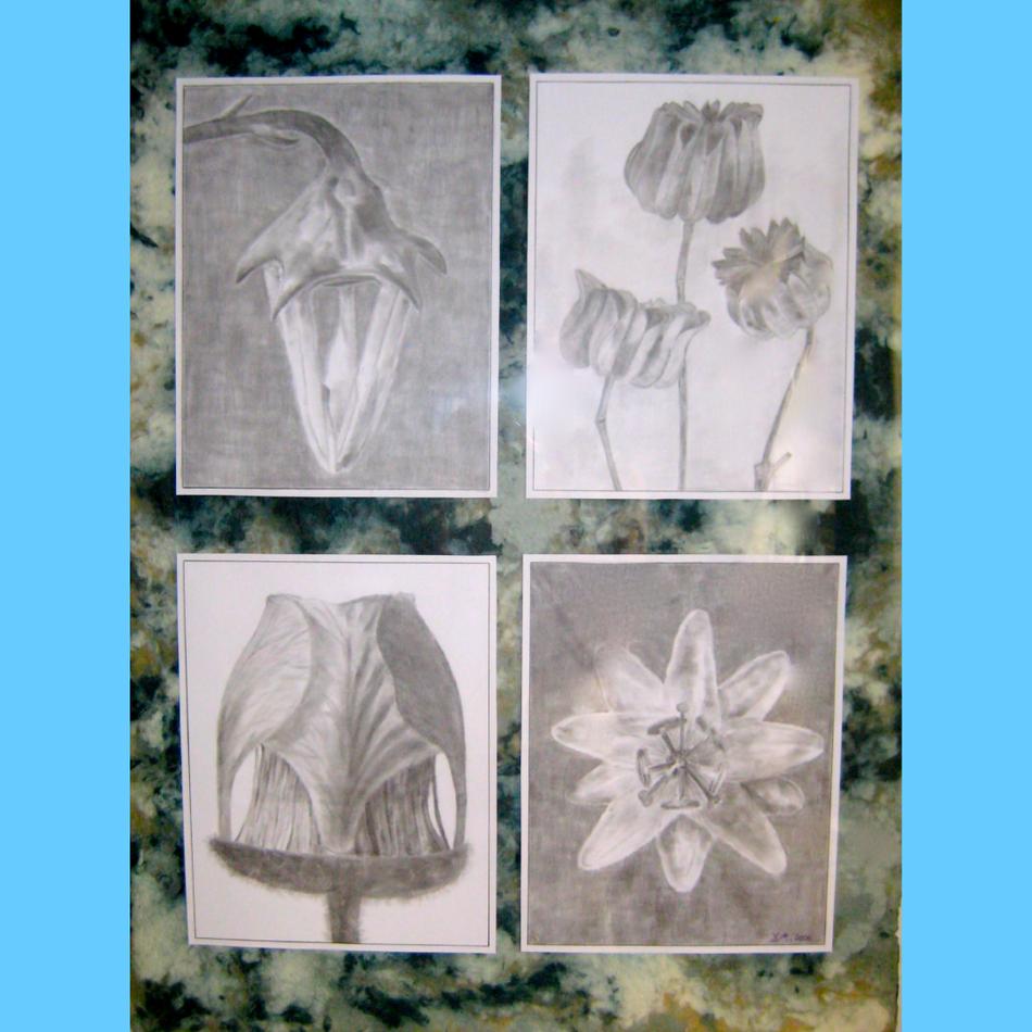 Fleur | Mine de Plomb & Papier Chiffon