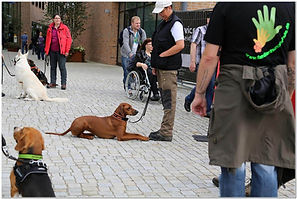 Hundeführerschein.JPG