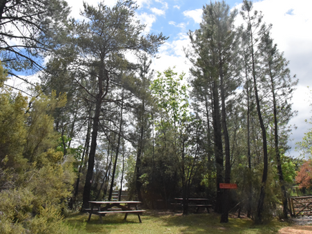 10 advise to plan your day at the Parc Animalier des Gorges de l'Ardèche