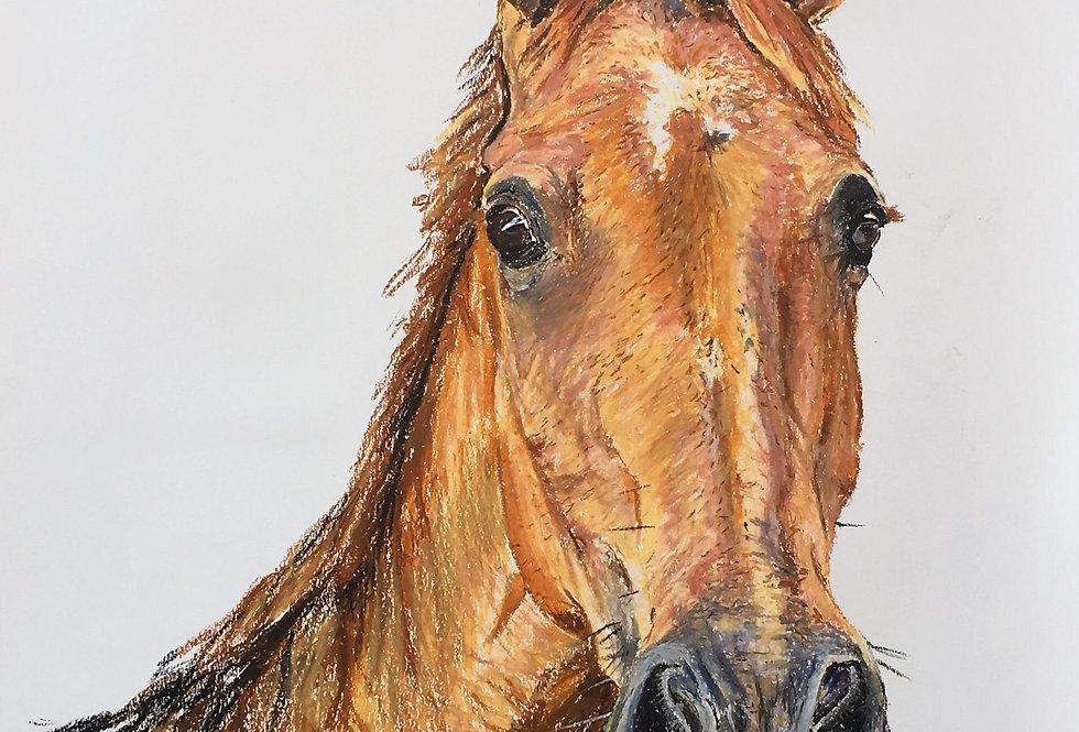 Hesketh The Horse