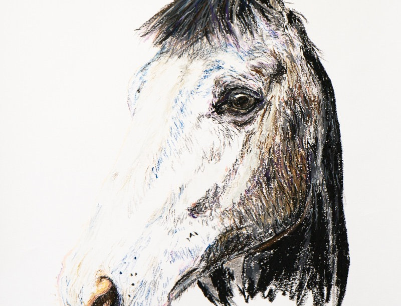 Hugo The Horse