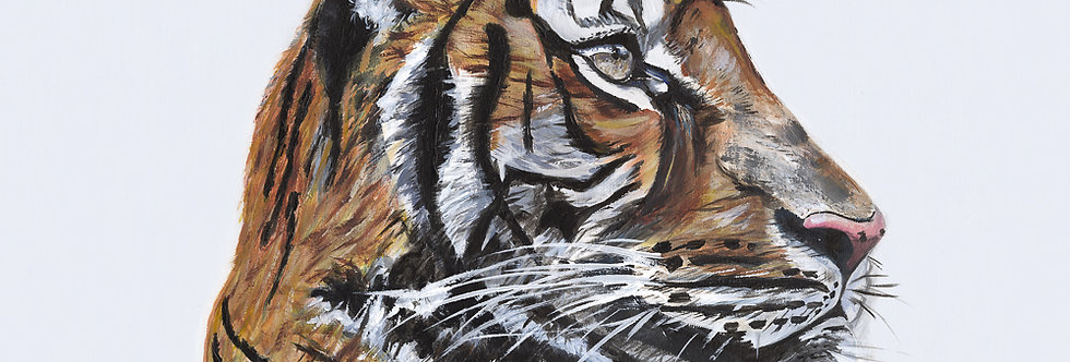 Tommy The Tiger