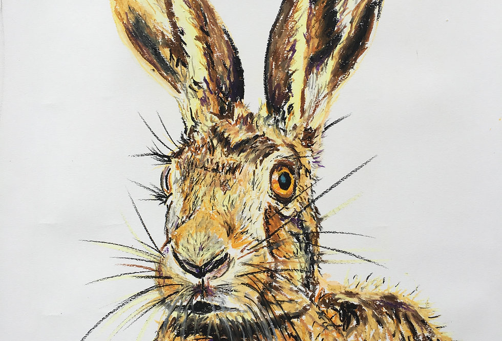 Hector The Hare