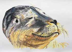 Sunny The Seal.jpg
